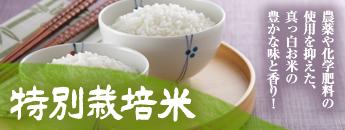 農薬や化学肥料の使用を抑えた、真っ白お米の豊かな味と香り!特別栽培米