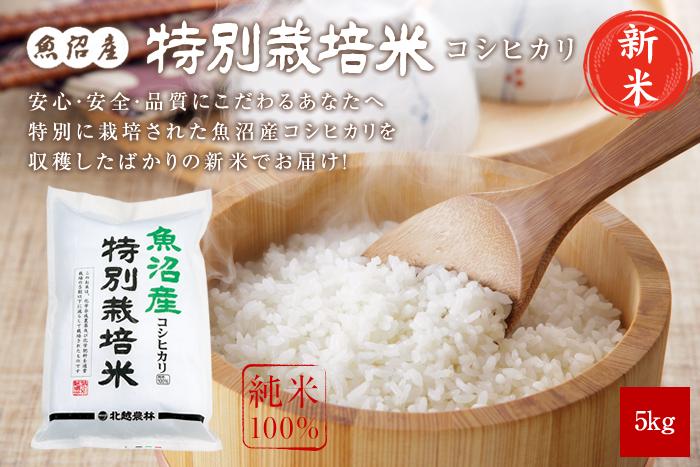 新米 魚沼産コシヒカリ 特別栽培米5kg(5kg×1袋)