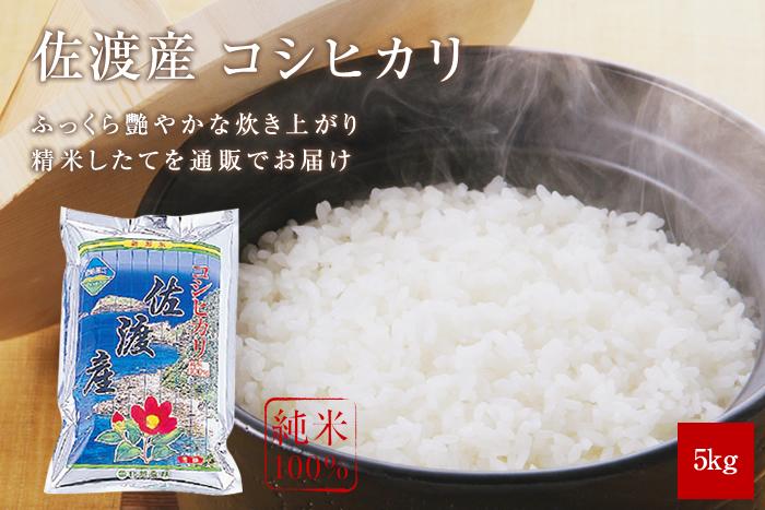 佐渡産コシヒカリ5kg(5kg×1袋)